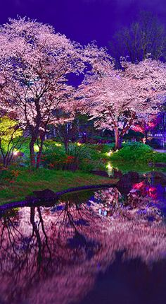 Goodnight from Tokyo • impressionist photo: Midori on PhotoExtract