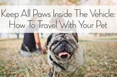 Keep All Paws Inside The Vehicle: How To Travel With Your Pet | TipsyWriter.com
