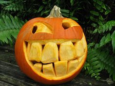 Big tooth pumpkin