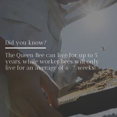 Royal Jelly is the only food a queen bee will eat, and some researchers believe the long life, and larger size of the queen bee is directly related to their Royal Jelly diet!  Royal Jelly packed full of amazing nutrients, such as amino acids and antioxidants, as well as trace amounts of minerals such as calcium, magnesium, zinc, potassium and selenium. . . #royaljelly #beeproducts #beesupplements #skincare #naturalbeauty #manukasouth Calcium Magnesium, Royal Jelly, Queen Bees, Amino Acids, Larger, Minerals, Skincare, Diet, Amazing