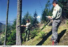 """Résultat de recherche d'images pour """"garde forestier"""""""