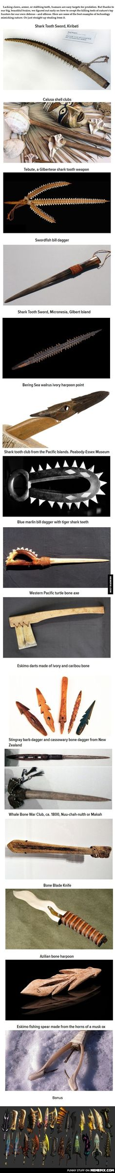 Human Weapons Made from Animal Weapons