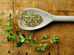 Oregano is a species of the mint family and has numerous health benefits. The oil of oregano found at local grocery stores is not a true form of oregano. True oregano grows wild in specific conditions in Mediterranean regions. Home Remedies For Sinus, Sinus Infection Remedies, Natural Remedies, Fungal Infection, Oregano Plant, How To Dry Oregano, Como Plantar Oregano, Natural Antifungal, Oregano Oil Benefits