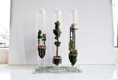 Os pequenos mundos em tubos de ensaio de Rosa de Jong