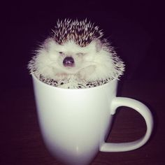 What could be as cute as a hedgehog in a cup sleeping?
