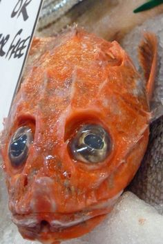 Fish face  That is one ugly fish!