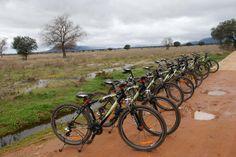 Nuevas visitas guiadas en Bicilceta por la Raña y Bosque de Cabañeros