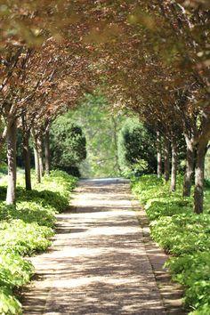 Garden Path  Dumbarton Oaks  Washington DC... so lovely here... must get back