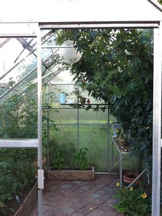 If I were to get a greenhouse, it would be something only for the plants, not a dining space.