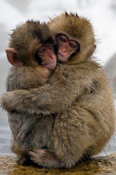 Snow Monkeys love