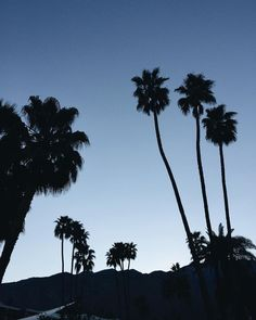 Bring back to living life underneath the palms.