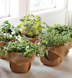 11 Indoor Plants for a Tiny Space. Instant herb gardens for windowsill or a small garden.