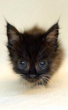 black kitten <3