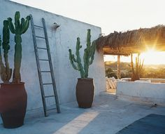 A sunny terrace with great cactus pots - Under the sun of Formentera, Spain
