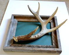 Tutorial: Antler Necklace Holder – Corvus tristis: Science, Craft and an Odd Bird Antler Jewelry Holder, Antler Necklace, Necklace Holder, Jewelry Organization, Antlers, Wood Projects, Display, Bird, Science