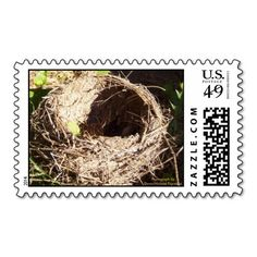 =>Sale on          Abandoned Robin's Nest Stamp           Abandoned Robin's Nest Stamp lowest price for you. In addition you can compare price with another store and read helpful reviews. BuyHow to          Abandoned Robin's Nest Stamp Online Secure Check out Quick and Easy...Cleck Hot Deals >>> http://www.zazzle.com/abandoned_robins_nest_stamp-172003548963557803?rf=238627982471231924&zbar=1&tc=terrest