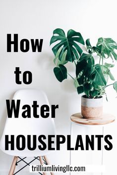 Overwatering is the reason houseplants die. Learn the proper way to water when and how often so that you can keep your tropical indoor plants healthy and beautiful year-round. Indoor Gardening Supplies, Container Gardening, Gardening Tips, Vegetable Gardening, Water House, Water Plants, Tropical Plants, Indoor Plants, Potted Plants