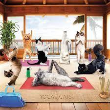 yoga cats - Buscar con Google