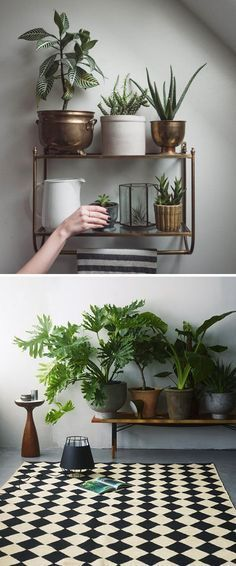 Can you keep a houseplant alive? If yes, then my hat goes off to you. So many succulents, ferns, and fiddle leaf figs have expired under my care that when I approach the garden center at Home Depot, t