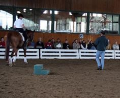 Learning to Train Young Horses: 2005 Young Horse Dressage Trainers Symposium | EquiSearch: Dressage Today