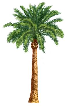 Palm Trees Clip Art | Units 5 + 6 Clipart - The Gospel Project