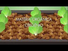 Reportagem sobre Aquaponia - TV Câmara SP - EQUILIBRIUM - YouTube
