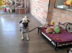 Spiky - unser Ladenmaskottchen :) Dogs, Animals, Flowers, Creative, Animales, Animaux, Pet Dogs, Doggies, Animal