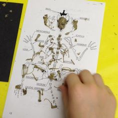 What's an Owl Pellet? Field Trip from Expedition Montessori