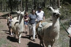 The Ranch at Fossil Creek leads a llama hike