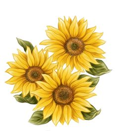 Watercolor painting Common sunflower Drawing Handpainted sunflower decoration 9121024 is about Sunflower Seed Flower Sunflower Petal Daisy Family Yellow Cut Flowers Annu. Sunflower Png, Sunflower Drawing, Sunflower Pictures, Watercolor Sunflower, Sunflower Tattoos, Watercolor Flowers, Watercolor Paintings, Daisy Drawing, Sunflower Clipart