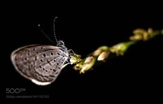 Butterfly by artlee298 #nature #mothernature #travel #traveling #vacation #visiting #trip #holiday #tourism #tourist #photooftheday #amazing #picoftheday