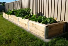 Build raised garden beds with Cirtex SureWall. The SureWall™ Retaining Wall Posts, provide a simple and easy solution for creating solid retaining walls and sleeper edging. This innovative system has significant labour savings due to minimum excavation and because there are no fasteners required this saves you time and money. One of the great features of the SureWall™ is the flush finish creating a smart, non-obtrusive wall. This also allows for easy garden maintenance.