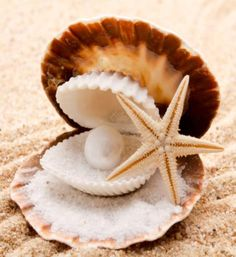 """Seashell, """"Life isn't about finding yourself. Life is about creating yourself."""" — George Bernard Shaw"""