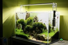 ada amano LED Lighting aquascape aquascaping nature aquarium tank
