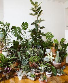 #plants