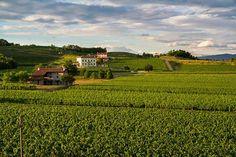 VIgne - Castello di Spessa #weekend #sanvalentino