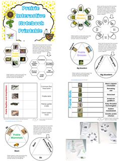"""Free """"pick a pocket of prairie"""" printable with student interactive notebooking page printables, pocket chart cards, and photos of the materials in use."""
