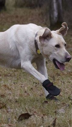 Protect your dog's feet in any environment with these Rugged Dog Boots.