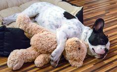 Tout savoir sur le sommeil de votre chien