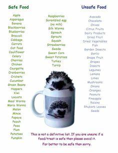 """Hedgehog Safe and Unsafe Food List! Hedgehog Facts, Hedgehog Food, Hedgehog Care, Pygmy Hedgehog, Baby Hedgehog, Hedgehog Treats, Diy Hedgehog House, Hedgehogs Pet Care, Hedgehog Supplies"