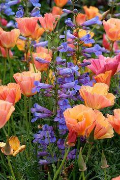 (33) Tumblr Wild Flowers, Beautiful Flowers, California Native Plants, California Flowers, Unusual Plants, Dream Garden, Garden Inspiration, Garden Ideas, Color Inspiration