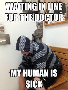 Funny cat picture - http://jokideo.com/funny-cat-picture/