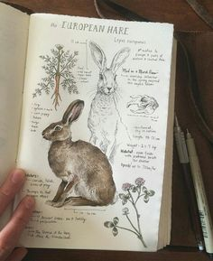 This is beyond fabulous. I absolutely love this natural history illustration of The European Hare. via This is beyond fabulous. I absolutely love this natural history illustration of The European Hare. Sketch Journal, Journal Pages, Journal Ideas, Drawing Journal, Journal Art, Diet Journal, Notebook Sketches, Artist Journal, Art Sketches