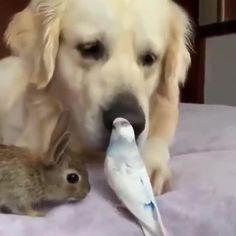Rabbit Behavior