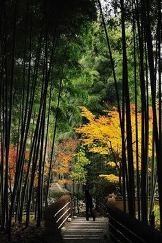 Bamboo path in Kyoto, Japan