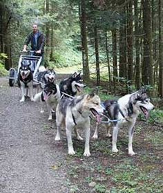 Wagentour Speicherschwendi Husky, Dogs, Animals, Animales, Animaux, Animal Memes, Husky Dog, Animal, Pet Dogs