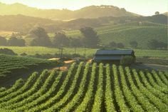 Spend a weekend in Sonoma Valley