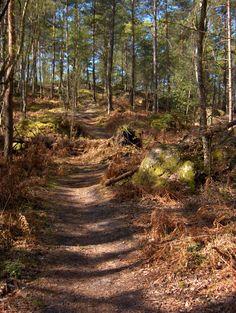 Le GR 11 à Franchard en forêt de Fontainebleau © C.Lavollee
