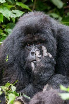 In beeld: zo grappig is de dierenwereld - Reizen - KnackWeekend.be