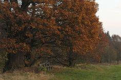 An den drei Eichen ... Country Roads, Plants, Resin, Seasons Of The Year, Oak Tree, Plant, Planets